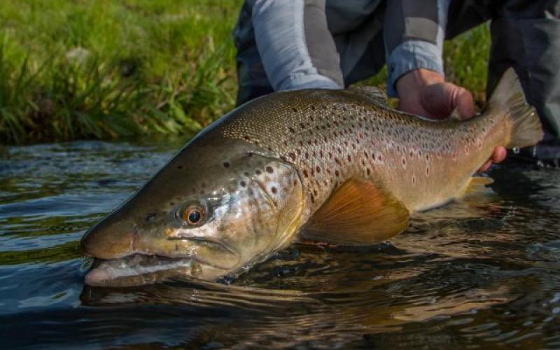 Idaho eastern oregon 2017 water report idaho fly for Owyhee river fishing report