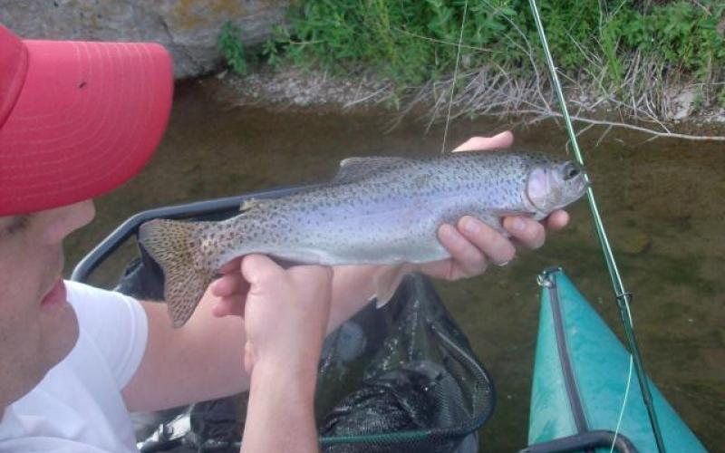 Another Rainbow Trout on the Henry's Fork