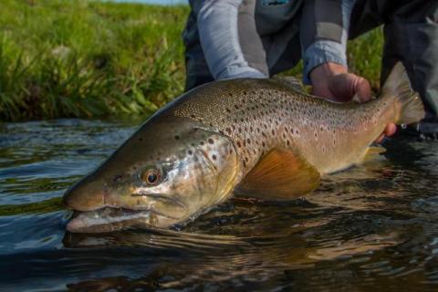 Henry's Fork Anglers Fishing Report - Devan Ence Photo
