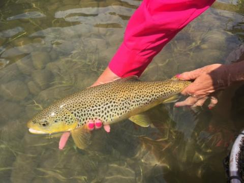 TRR Outfitters: East Idaho Fly Fishing Report