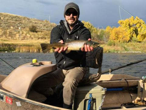 Brown Trout on the Henry's Fork