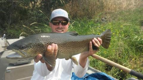 Lower Henry's Fork Brown Trout