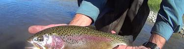 Idaho fly fishing report idaho 39 s fly fishing experts for Ruby river fishing report